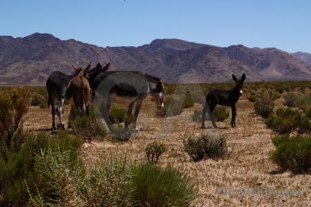 Sky bush donkey landscape salta tour.