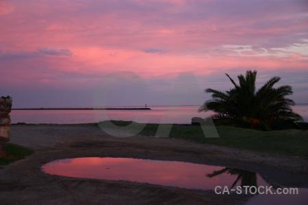 Sky colonia del sacramento sunset south america palm tree.