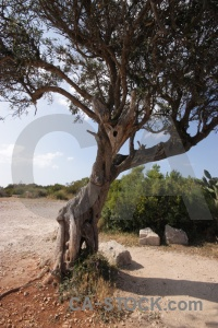 Sky europe javea single tree.