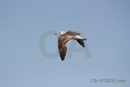 Sky flying animal bird.