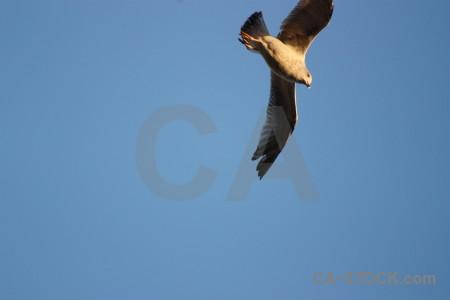 Sky flying animal bird seagull.