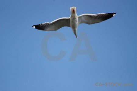 Sky flying animal blue bird.