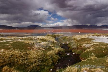 Sky laguna colorada bolivia altitude mountain.