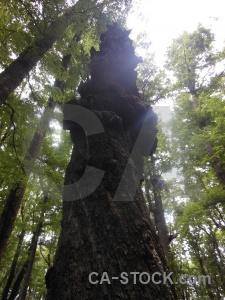Sky new zealand tree south island forest.