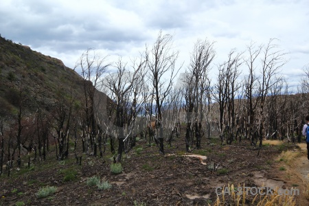 Sky patagonia trek branch day 4.