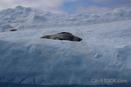 Sky seal leopard cloud wilhelm archipelago.