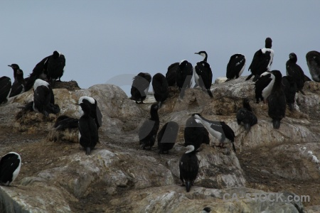 Sky south pole antarctic shag horseshoe island rock.