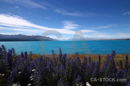 Sky water lake pukaki plant snowcap.