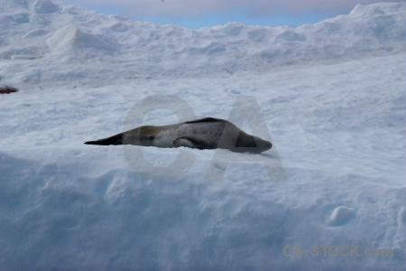 Sky wilhelm archipelago animal argentine islands day 8.