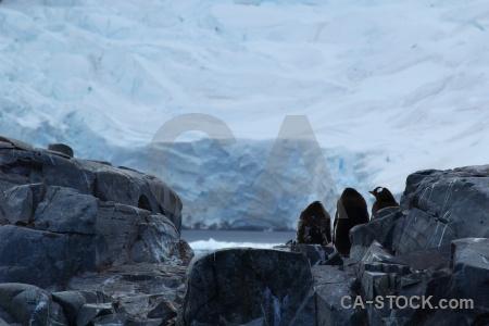 Snow antarctica cruise south pole rock antarctic peninsula.