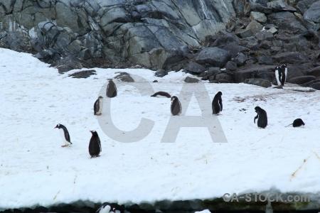 Snow antarctica cruise wiencke island penguin.