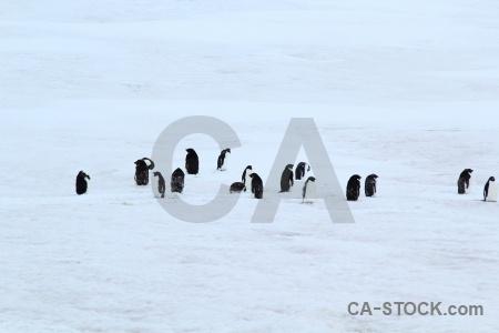 Snow millerand island ice bellingshausen sea antarctica cruise.