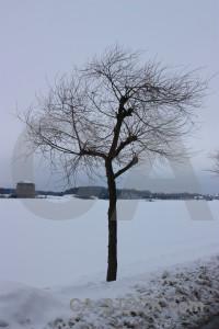 Snow tree landscape winter single.