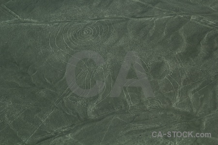 South america animal nazca lines unesco monkey.