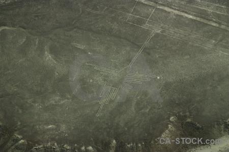 South america bird flying animal nazca lines.