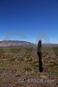 South america cactus mountain landscape plant.