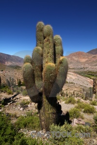 South america cactus quebrada de humahuaca plant rock.