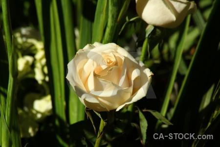 South america flower petal plant peru.