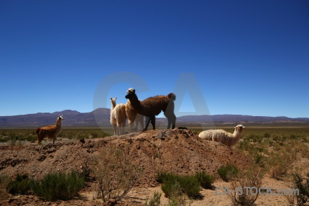 South america landscape andes mountain salta tour.