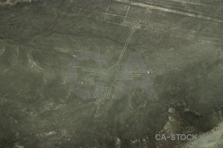 South america nazca bird lines flying.
