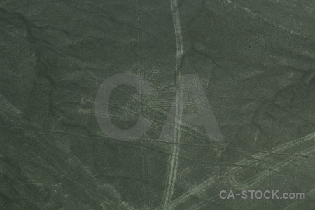 South america nazca lines animal geoglyph aerial.