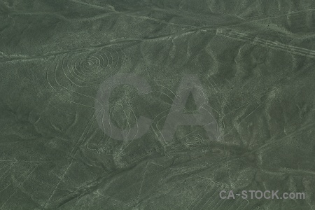 South america peru nazca animal geoglyph.