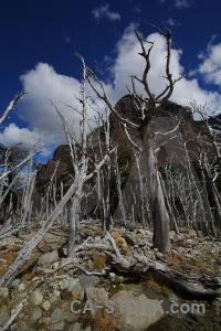 South america rock circuit trek tree mountain.