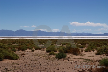 South america salinas grandes landscape bush mountain.