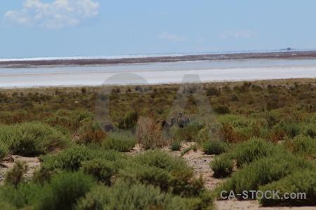 South america sky andes bush salt flat.