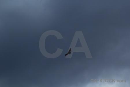 South america sky patagonia circuit trek animal.