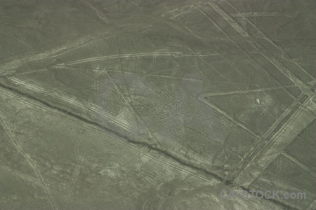 South america spider unesco animal nazca lines.