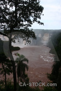 South america spray waterfall tree iguassu falls.