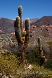 South america unesco quebrada de humahuaca salta tour landscape.