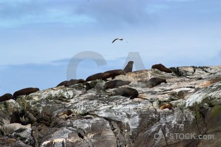 South island cloud bird rock seagull.