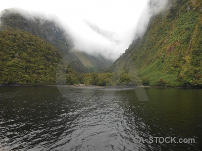 South island cloud tree fiord doubtful sound.