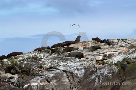 South island fiordland cloud new zealand sound.