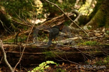 South island forest animal bird branch.