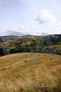 South island landscape bush new zealand grass.