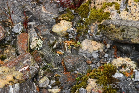 South island moss rock stone new zealand.