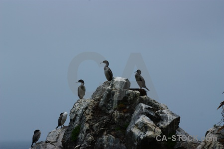South island new zealand rock bird animal.