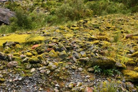 South island new zealand rock stone plant.