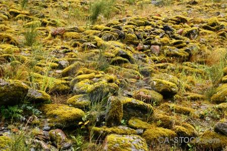 South island plant moss stone rock.