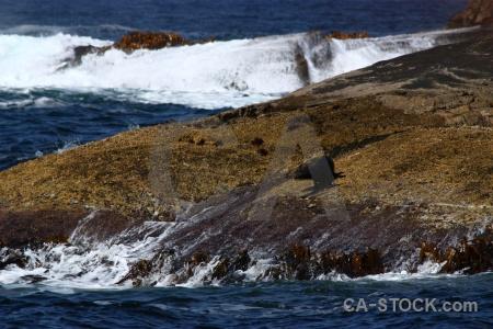 South island seal rock sound new zealand.