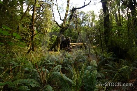South island sky plant new zealand moss.
