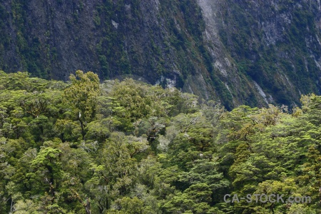 South island sound fiord new zealand tree.