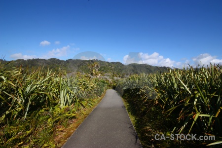 South island west coast bush landscape sky.