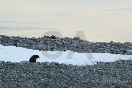 South pole antarctica cruise marguerite bay sky antarctic peninsula.