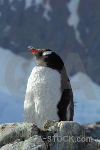 South pole antarctica rock snow wilhelm archipelago.
