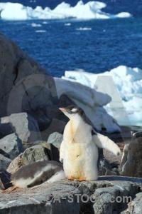 South pole petermann island ice animal day 8.