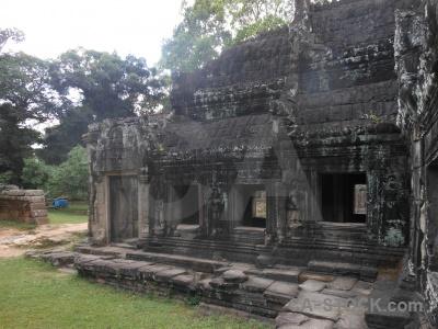 Southeast asia angkor temple lichen grass.